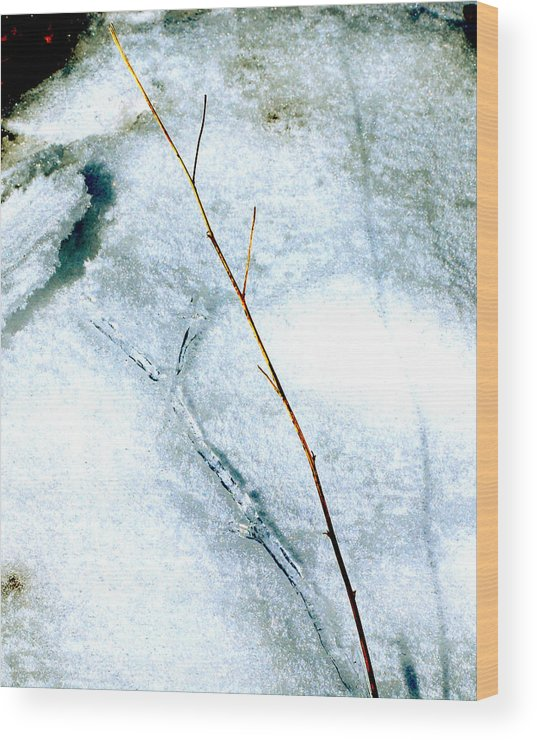 Nature Wood Print featuring the photograph Ice Shadow by Lisa Kane