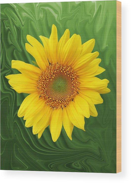Sunflower Wood Print featuring the photograph Kansas Sunflower by Jim Darnall