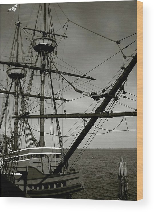 Mayflower Wood Print featuring the photograph Mayflower by Heather Weikel