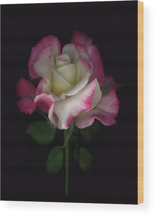 Rose Wood Print featuring the digital art Niki's Rose by Sandi F Hutchins