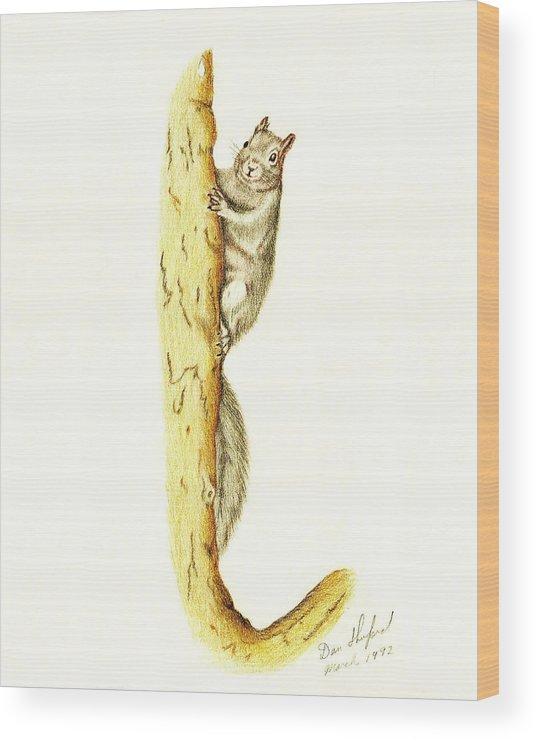 Dan Shuford Wood Print featuring the drawing Pete by Daniel Shuford