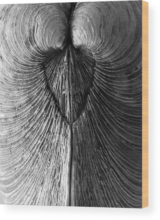 Seashell Wood Print featuring the photograph Quahog Closeup No.1 by Henry Krauzyk