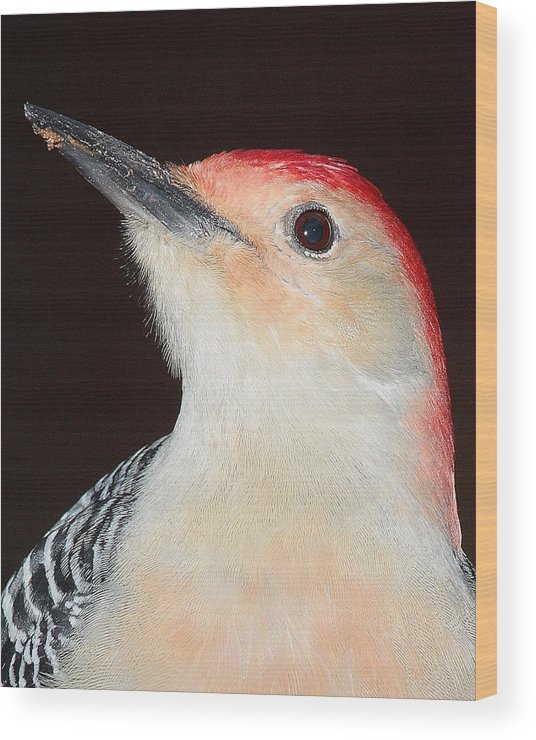 Bird Wood Print featuring the photograph Red-bellied Up Close by Larry Federman