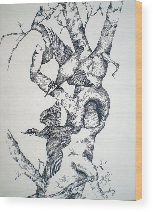 Nature Wood Print featuring the drawing Tree And Birds by Tammera Malicki-Wong