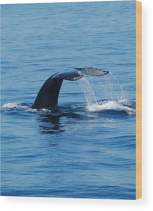 Whales Wood Print featuring the photograph Whales Tale by Lisa Kane