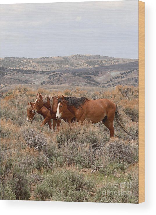 Horse Wood Print featuring the photograph Wild Horse Trio by Max Allen