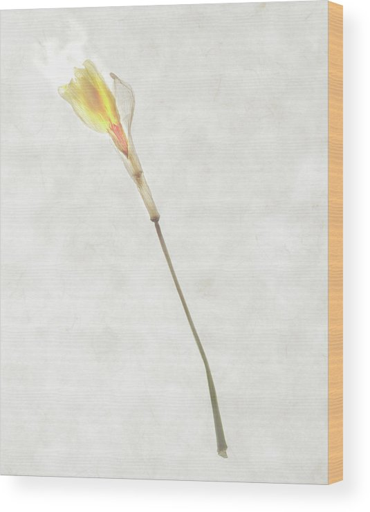 Yellow Wood Print featuring the photograph Still Life Of A Flower by Joyce Tenneson
