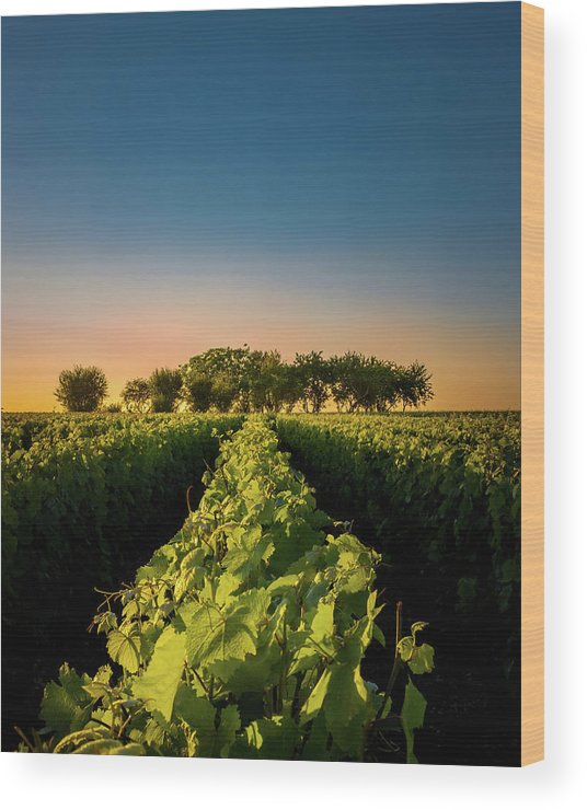 France Wood Print featuring the photograph Vouvray Vineyard by Joseph Smith