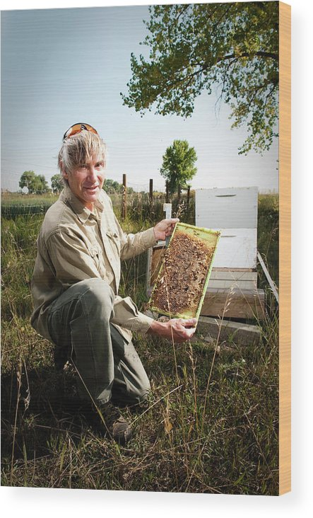 Adult Wood Print featuring the photograph A Bee Keeper Checks On The Health by Randall Levensaler