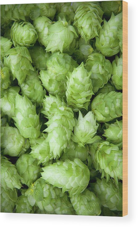 Alcohol Wood Print featuring the photograph Fresh Hops by Licreate
