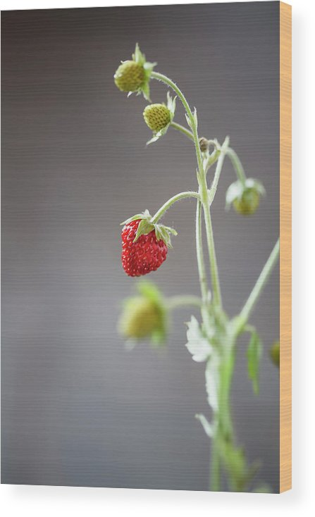 Wild Strawberry Wood Print featuring the photograph Germany, Baden Wuerttemberg, Wild by Westend61