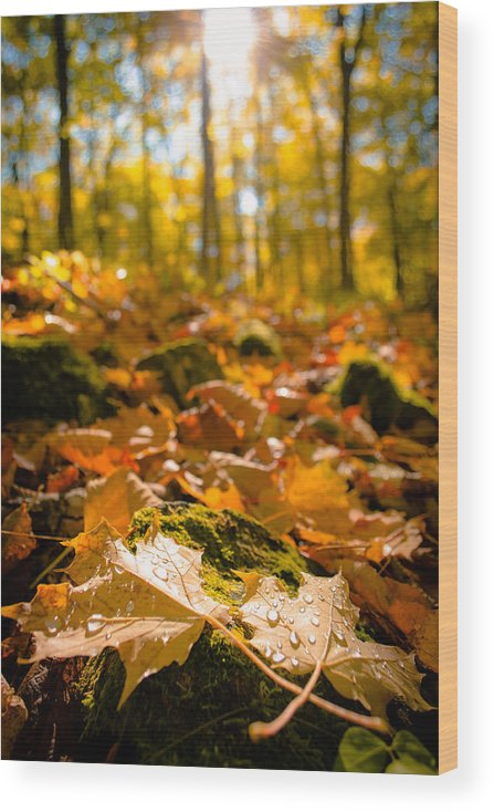 Door County Wood Print featuring the photograph Glistening Autumn Dew by Ever-Curious Photography