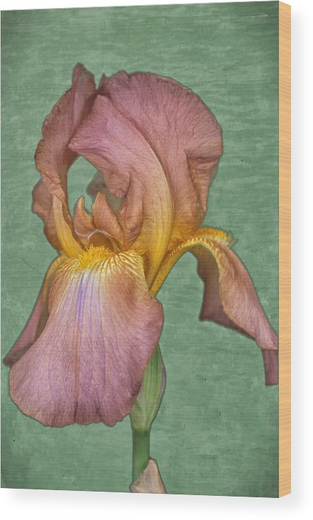 Iris Wood Print featuring the photograph Iris in Watercolor by Keith Gondron