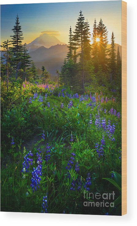America Wood Print featuring the photograph Mount Rainier Sunburst by Inge Johnsson