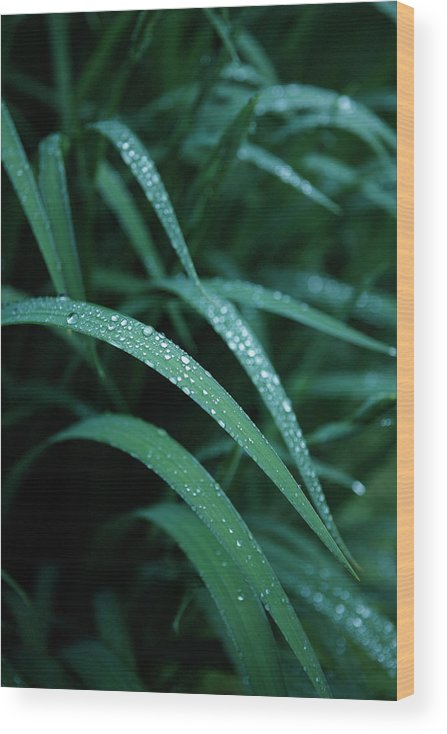 Tranquility Wood Print featuring the photograph Raindrop by Seiji Nakai