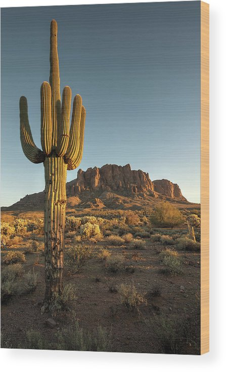 Saguaro Cactus Wood Print featuring the photograph Saguaro Cactus And Superstition by Kjschoen