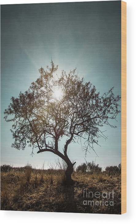 Dark Wood Print featuring the photograph Single Tree by Carlos Caetano