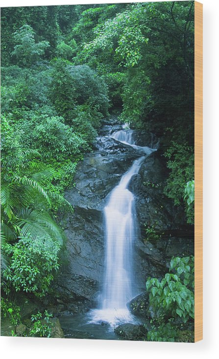 Scenics Wood Print featuring the photograph Stream by Kranthi