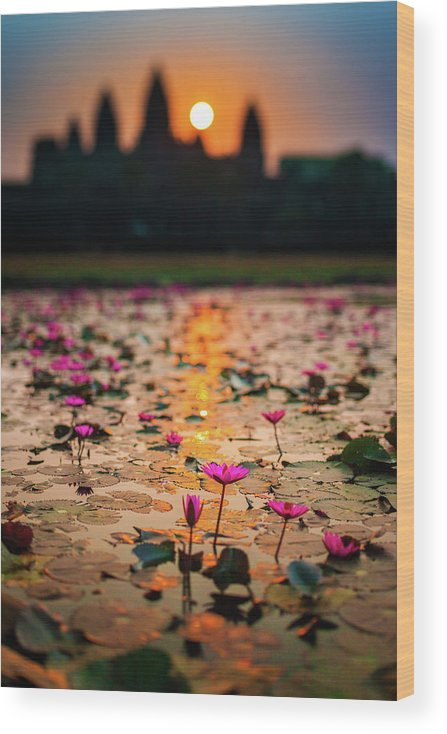 Tranquility Wood Print featuring the photograph Sunrise Over The Lotus Flowers Of by © Francois Marclay