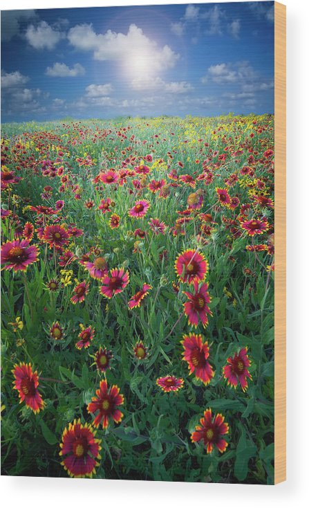 Fort Worth Wood Print featuring the photograph Texas Wildflowers by Dean Fikar