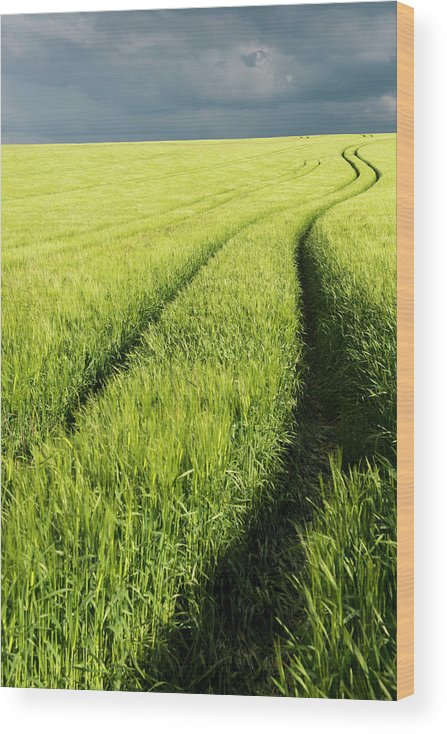 Scenics Wood Print featuring the photograph Tire Tracks In Grain Field by Thomas Winz