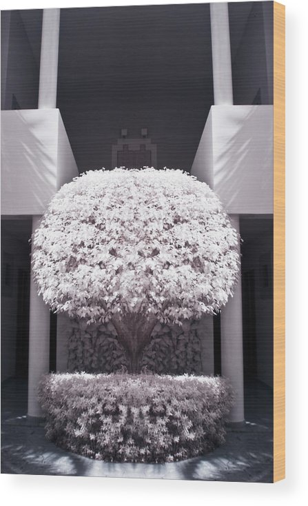 3scape Photos Wood Print featuring the photograph Welcome Tree Infrared by Adam Romanowicz