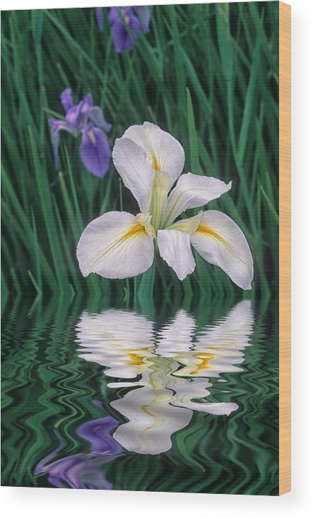 Flower Wood Print featuring the photograph White Iris by Keith Gondron