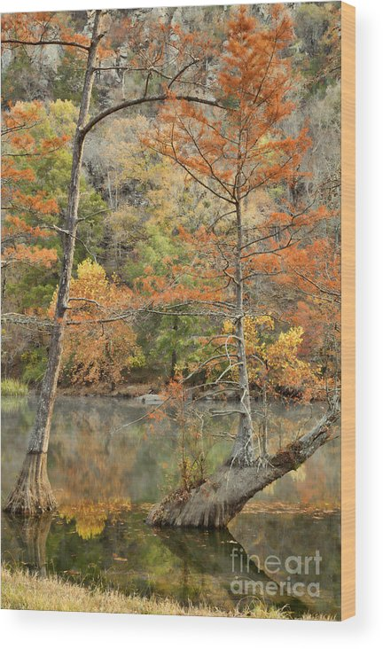 Landscape Wood Print featuring the photograph Cypress Trees in the Morning Light by Iris Greenwell