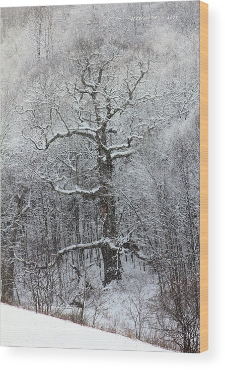 Trees Wood Print featuring the photograph Old Oak Tree by Carolyn Postelwait