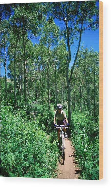 Young Adult Wood Print featuring the photograph Ranger On Mountain Bike, Steamboat Springs, Colorado, United States Of America, North America by Holger Leue