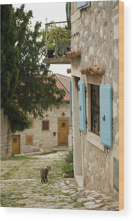 Croatia Wood Print featuring the photograph Rovinj by Ian Middleton