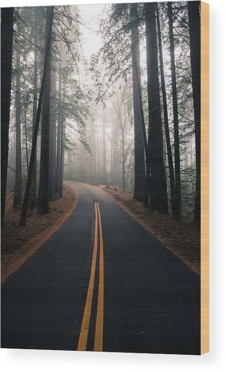 Mount Tamalpais Wood Print featuring the photograph Across the forest by Matthew Ronder-Seid