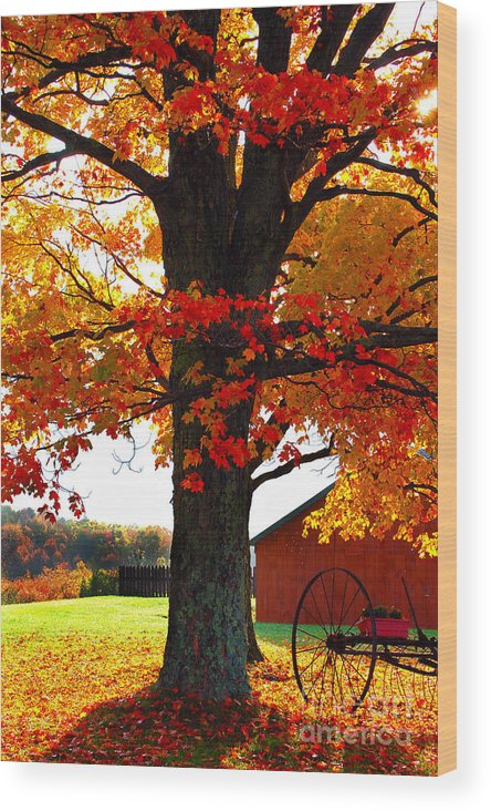 Berry Wood Print featuring the photograph Adirondack Color Show by Diane E Berry