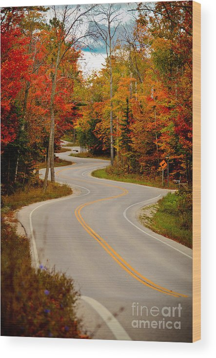 Door County Wood Print featuring the photograph Asphalt Creek in Door County by Ever-Curious Photography