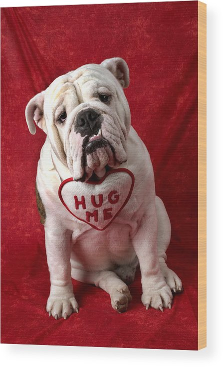 Dog Wood Print featuring the photograph English Bulldog by Garry Gay