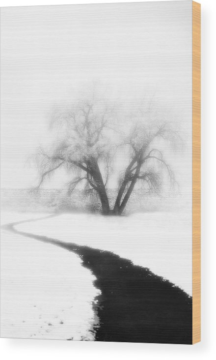 Tree Wood Print featuring the photograph Getting There by Marilyn Hunt