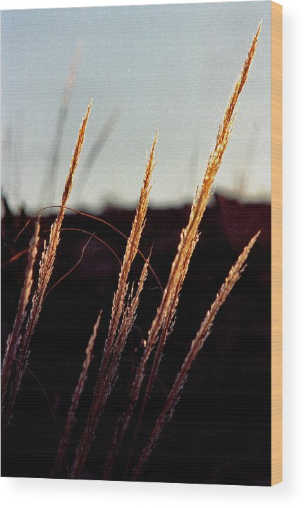 Grass Wood Print featuring the photograph Glistening Grass by Randy Oberg