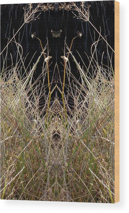 Nature Wood Print featuring the photograph Grass Chief by Marilynne Bull