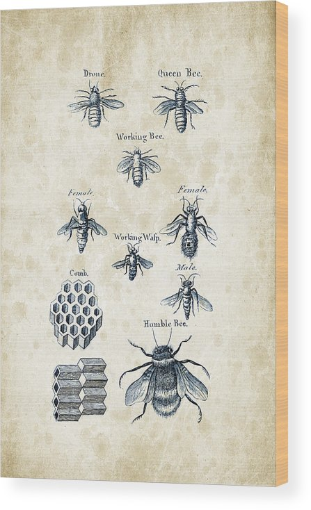 Bee Wood Print featuring the digital art Insects - 1792 - 14 by Aged Pixel