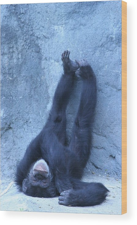 Monkey Wood Print featuring the photograph Nap Time by Linda Russell