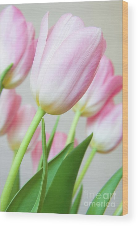 Flower Wood Print featuring the photograph Pink Tulip Flowers by Julia Hiebaum