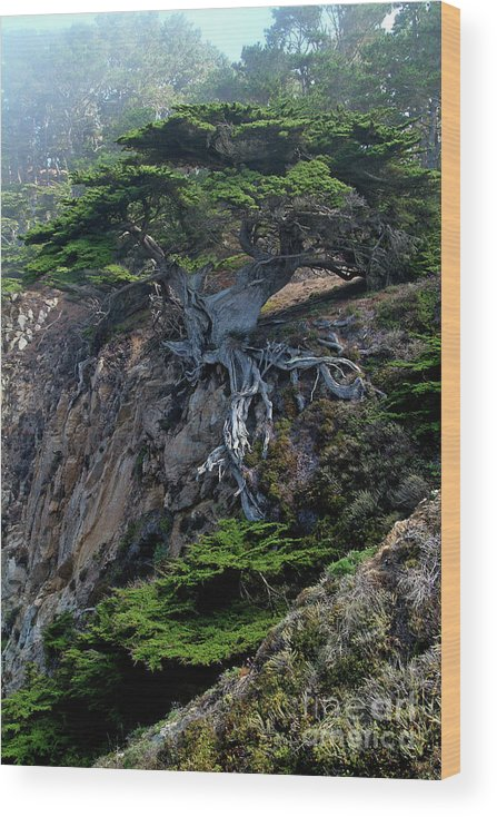Landscape Wood Print featuring the photograph Point Lobos Veteran Cypress Tree by Charlene Mitchell