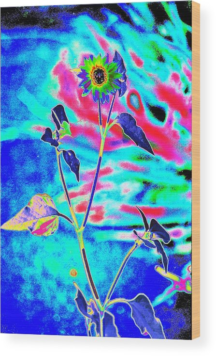 Psychedelicized Daisy Wood Print featuring the photograph Psycho Daisy by Richard Henne