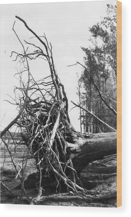 Storm Wood Print featuring the photograph Roots by Steven Crown