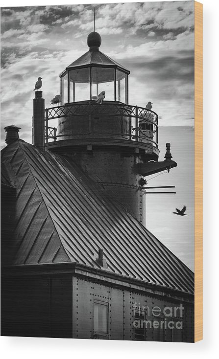 Door County Wood Print featuring the photograph Seagull Layover by Ever-Curious Photography