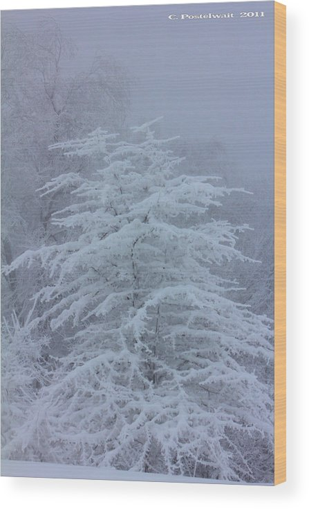 Snow Wood Print featuring the photograph Snow Covered Tree in the Fog by Carolyn Postelwait