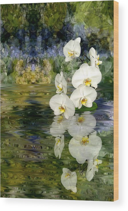 Orchid Wood Print featuring the photograph Water Orchid by Tom Romeo