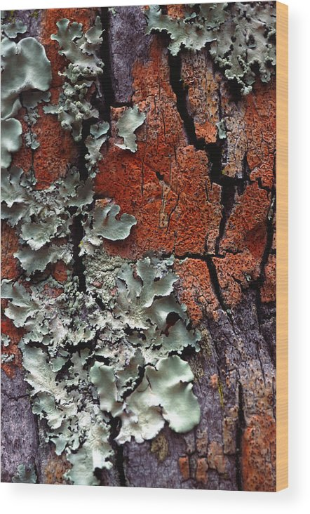 Built Structure Wood Print featuring the photograph Lichen On Tree Bark by John Foxx