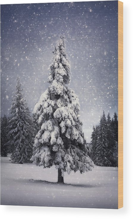 Scenics Wood Print featuring the photograph Winter Tree by Borchee