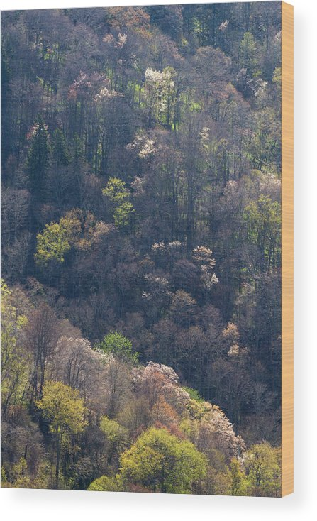 Scenics Wood Print featuring the photograph Early Spring, North Carolina by Jerry Whaley